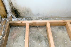 Mold Removal on Long Island